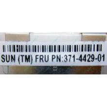 Серверная память SUN (FRU PN 371-4429-01) 4096Mb (4Gb) DDR3 ECC в Бердске, память для сервера SUN FRU P/N 371-4429-01 (Бердск)